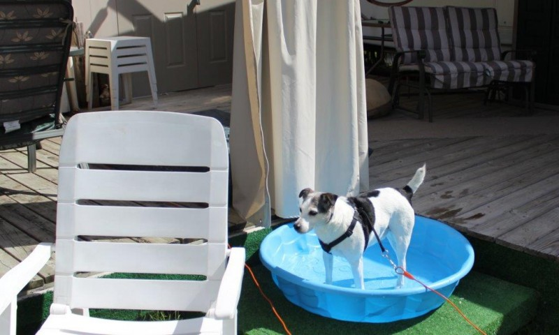 dog-in-pool-800x480.jpg