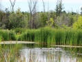 Ducks-on-pond-800x480.jpg